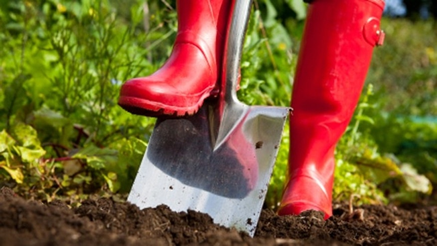 Digging With Red Boots
