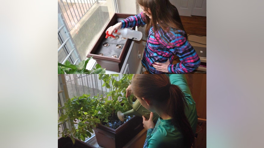 Take the dirt out of the dirty work with 'just add water' seeding kids.