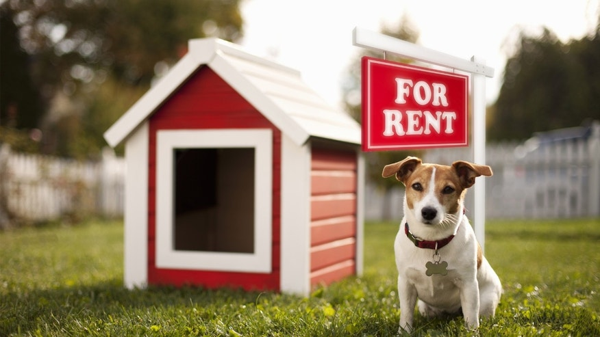 doghouse for rent