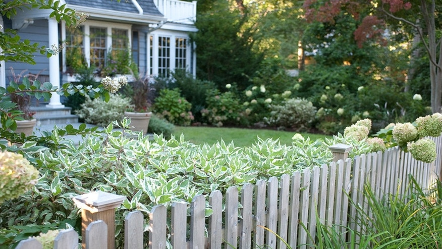 7 creative ways to incorporate the basic shrub fox news for Westover landscape design