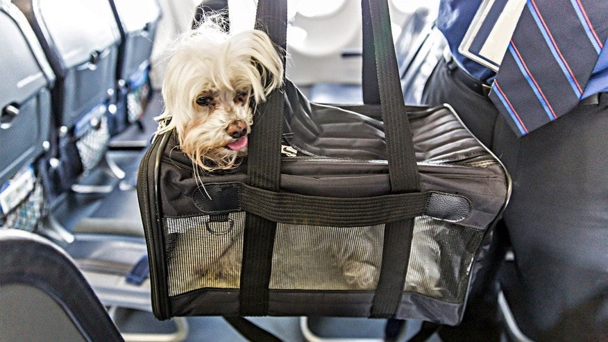 If you try to take your pets with you to a new country, it might not fly...