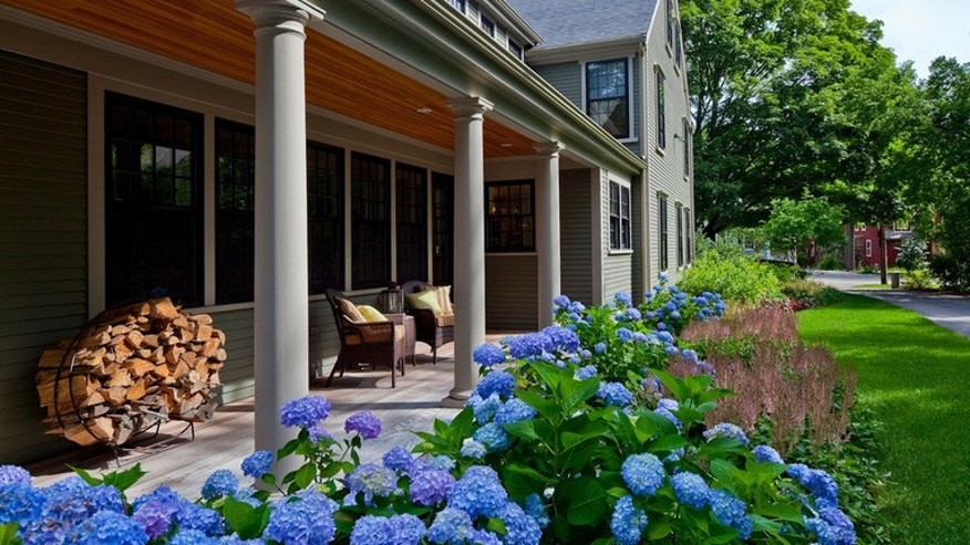 Classic Bigleaf Hydrangeas Add Old Fashioned Charm to a Garden