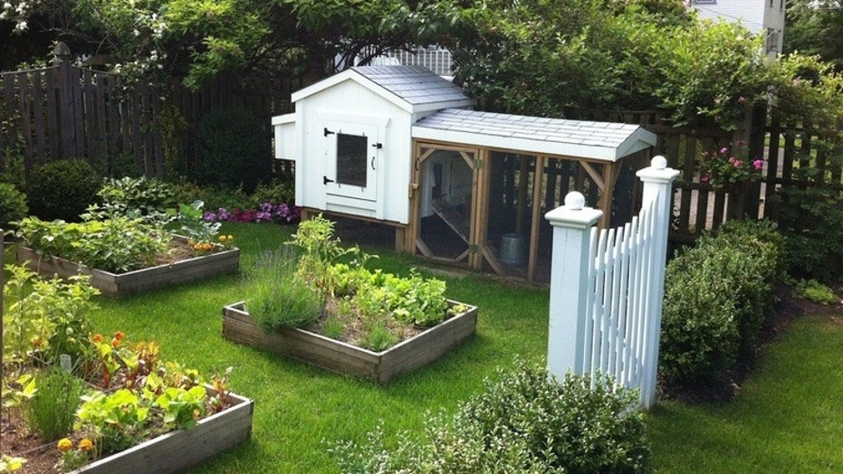 Is a backyard chicken coop right for you? | Fox News