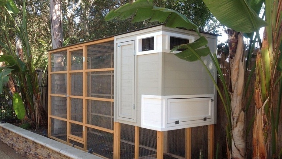 Is a backyard en coop right for you? | Fox News Hen House Design For Many Hens Html on
