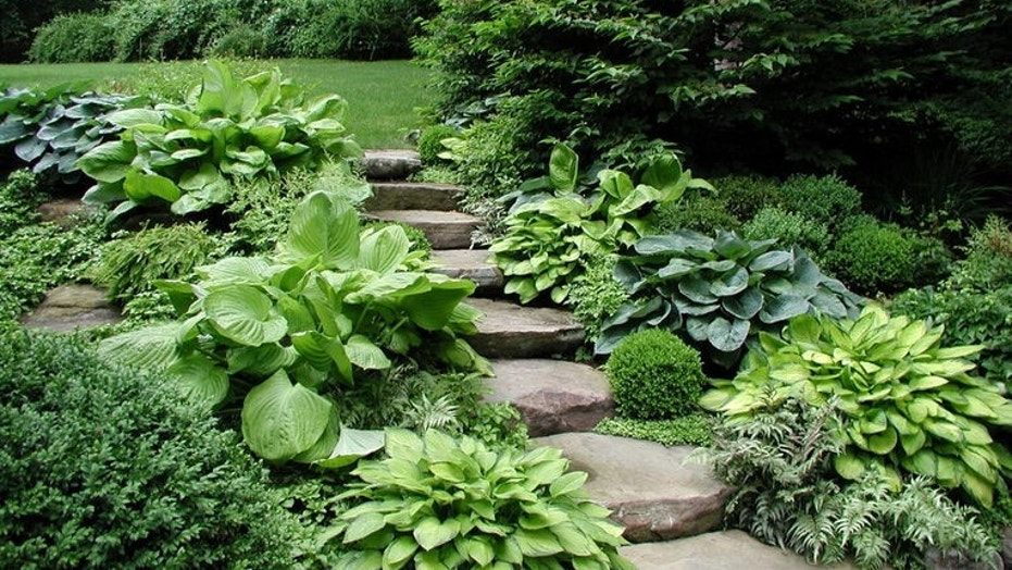 Houzz_Hostas1