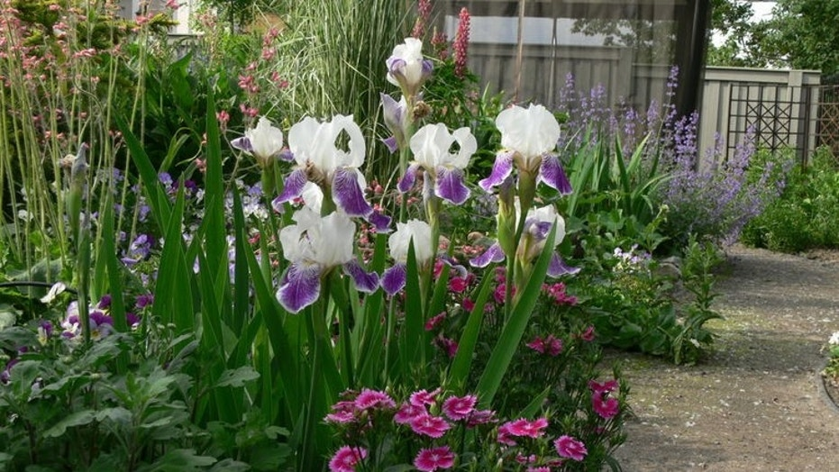 Incorporate irises in your fall garden for beautiful spring blooms ...