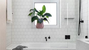 Houzz_Houseplants2