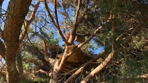 Tri-level tree house found in Lantern Bay Park in Dana Point on Wednesday, Feb. 7. (Photo courtesy of Sgt. Rich Himmel)
