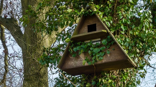 A Barn Owl bird nesting box fixed to a tree trunk in a rural location