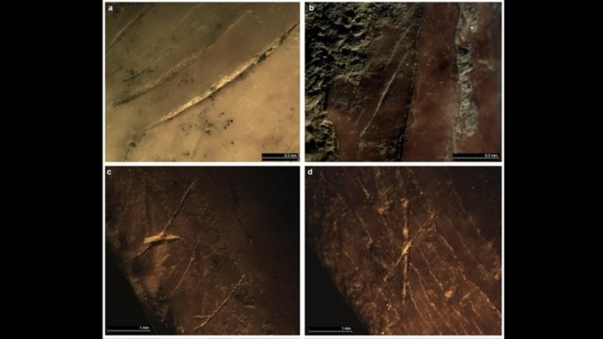 Examples of cut-marks on bird bones from Gibraltar sites, which experts say suggest man's extinct cousins once wore feathers.
