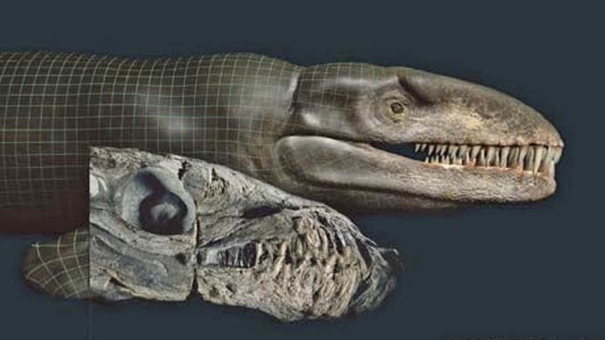 Computer images of the skull of a newfound species of crocodile-like marine reptile show how the massive predator might have looked.