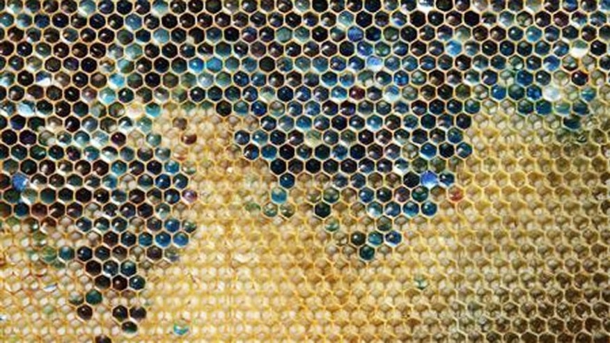 Oct. 5, 2012: A coloured honeycomb from a beehive.