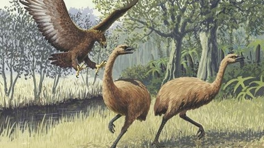 An artist's rendition of an eagle attacking two extinct New Zealand moa.