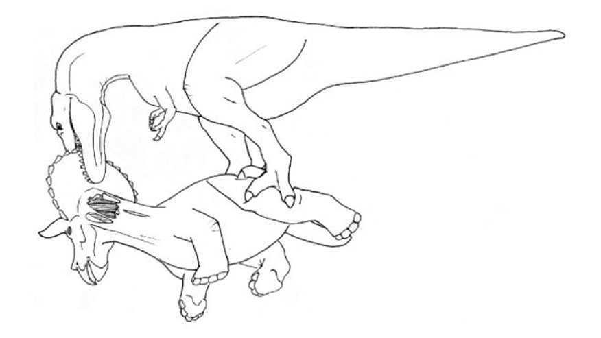 Tyrannosaurus tugging at the frill of a dead Triceratops.