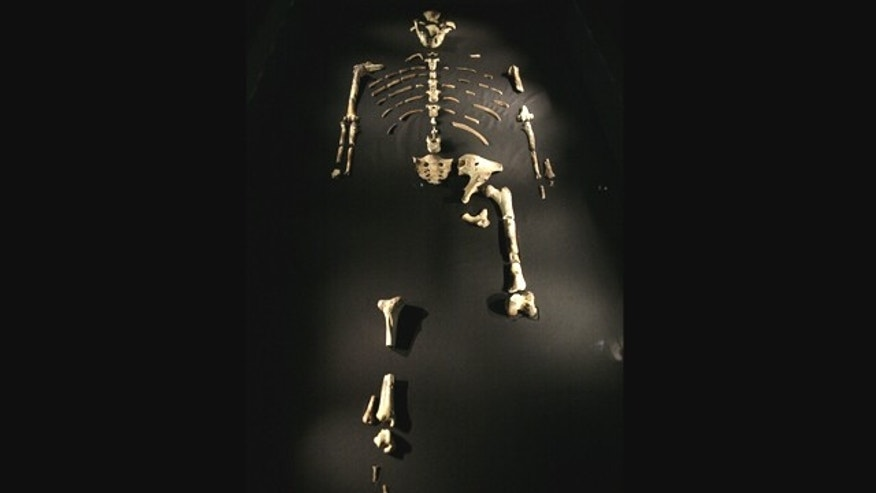 The 3.2 million year old Australopithecus afarensis skeleton called Lucy, part of a new exhibit, is displayed during a press preview at the Houston Museum of Natural Science in Houston Tuesday, Aug. 28, 2007. The exhibit, which opens Friday, Aug. 31, marks the first time Lucy has been displayed in public outside her native Ethiopia -- a trip that has unleashed an international furor among scientists.