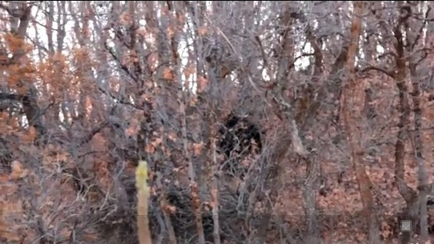 "Oct. 30, 2012: A Utah resident filmed this video that he says depicts a Bigfoot encounter. ""On our way up, we thought we saw a bear, until the monster stood up and looked right at us,"" he wrote on YouTube."