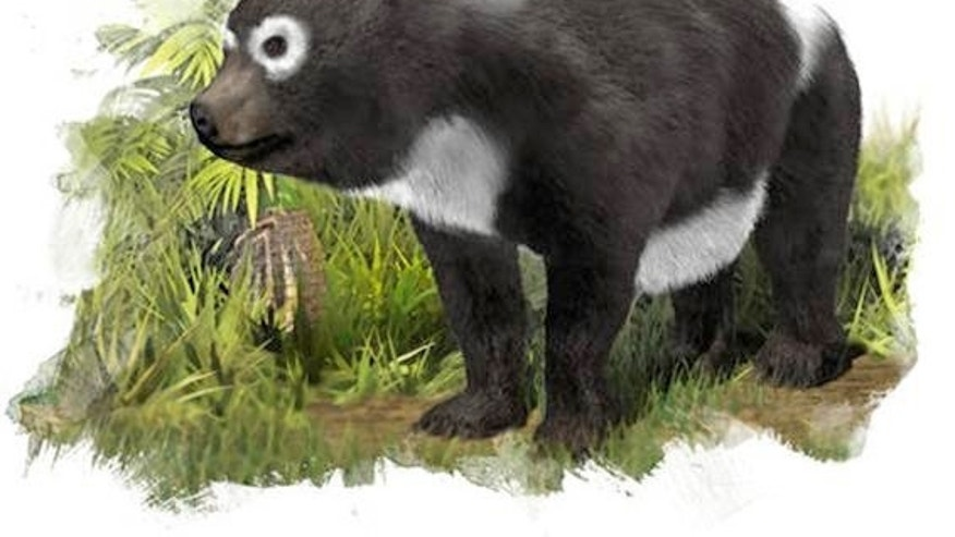 The oldest known ancestor of the giant panda lineage (<em>Ailuropoda melanoleuca</em>) lived about 11.6 million years ago in what is now Spain.