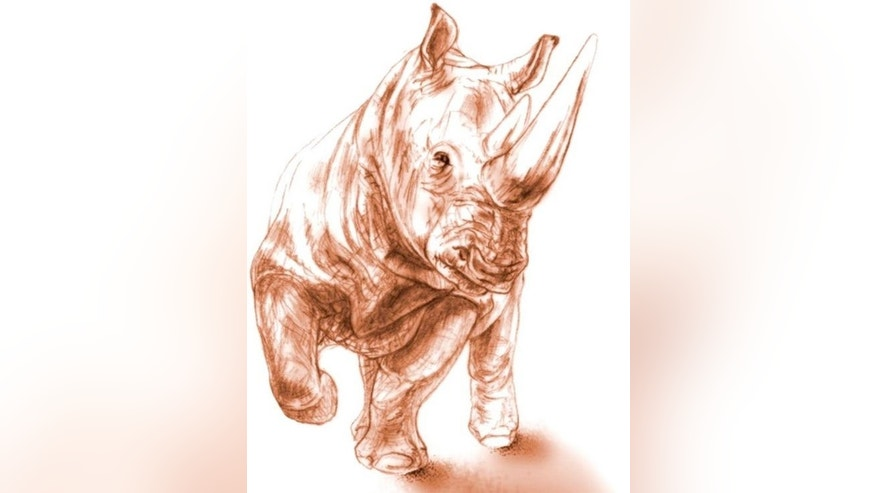 When alive, the rhino (Ceratotherium neumayri) would have weighed between 3,300 and 4,400 pounds (1,500 and 2,000 kilograms), about the size of a young white rhino, though sporting a shorter head, Antoine said. The animal was 10 to 15 years old.