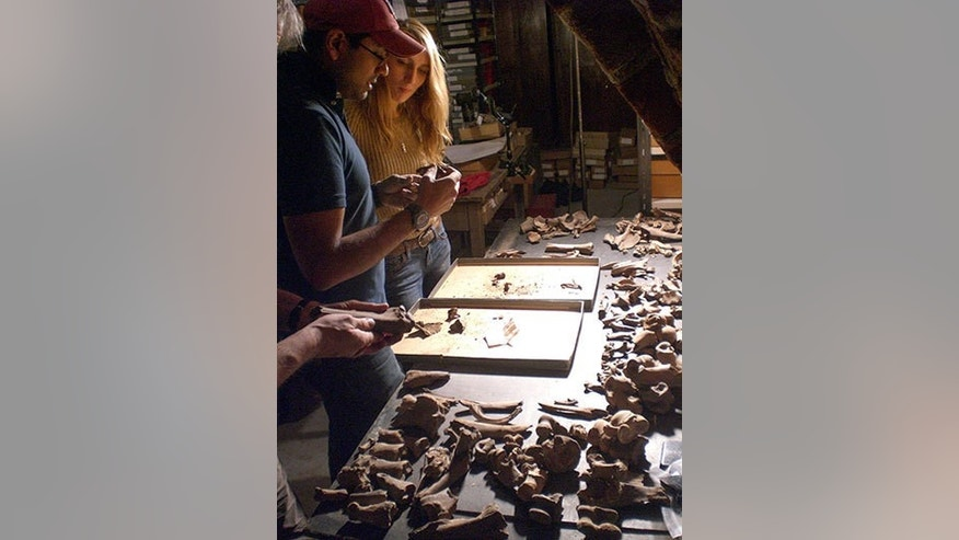 Stanford Assistant Professor Krish Seetah and Reading University student Rose Calis analyze animal bones in the basement of Riga Castle, Latvia.