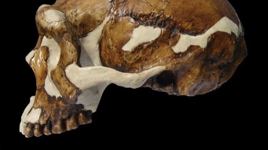 Homo erectus fossil from Zhoukoudian caves.