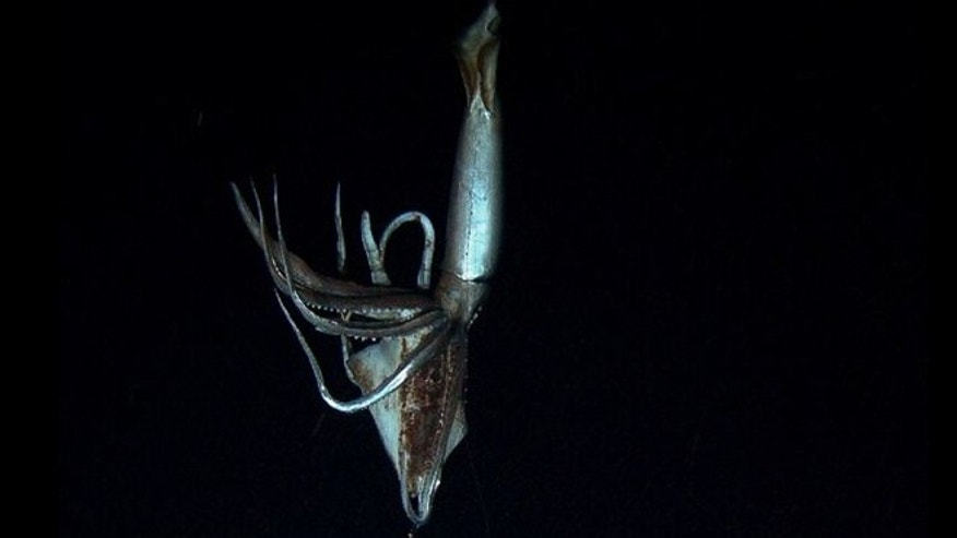 Footage captured by NHK and Discovery Channel in July 2012 shows a giant squid in the sea's depths.
