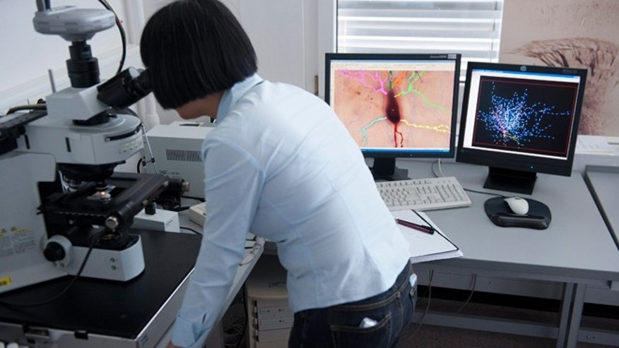 May 9, 2011: Scientist Ying Shi looks into a microscope at the Blue Brain team and the Human Brain Project (HBP) of the Ecole Polytechnique Federale de Lausanne (EPFL), in Lausanne, Switzerland.