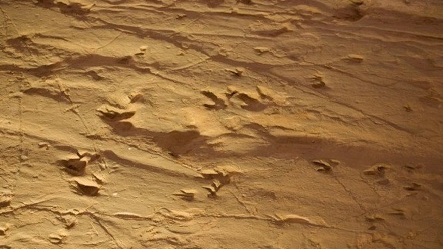 Between 3,000 and 4,000 fossilized dinosaur footprints were found in Central Australia