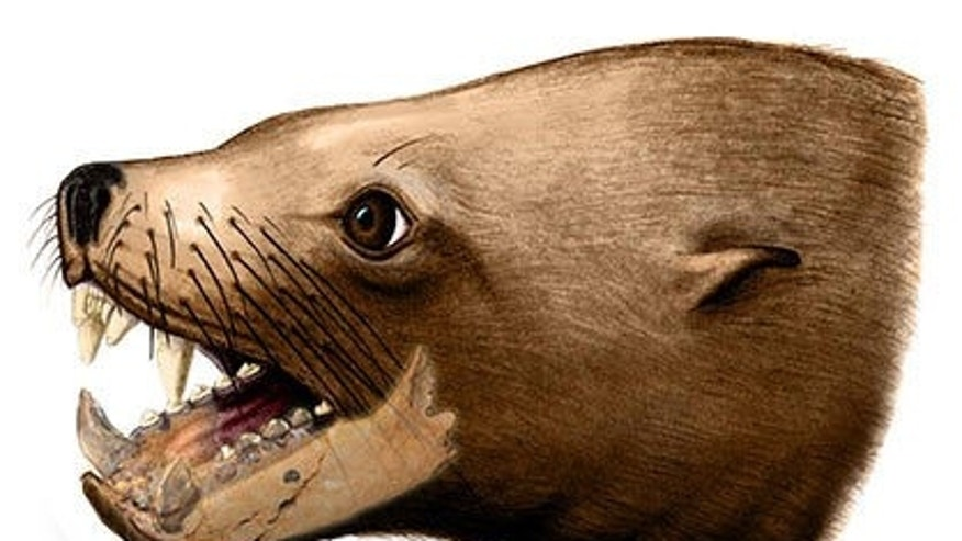 An artist's rendition of the extinct walrus, Pelagiarctos thomasi