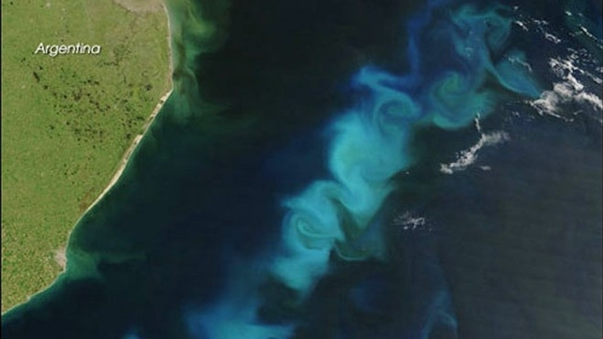 Researchers used samples from the Sargasso Sea and coastal Oregon waters, finding four new viruses that killed the most abundant bacteria in the oceans (SAR11) in lab experiments. Here, a phytoplankton bloom in the South Atlantic Ocean.