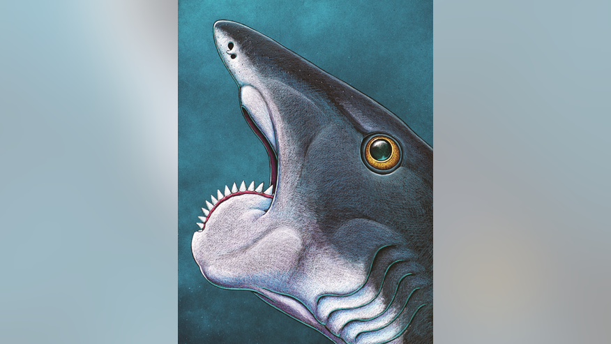 An artist's conception of <i>Helicoprion's</i> bizarre spiral jaw.