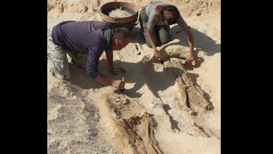 Archaeologists have unearthed an ancient cemetery at the Egyptian city of Amarna. The cemetery held the commoners, rather than the elites, of the city.
