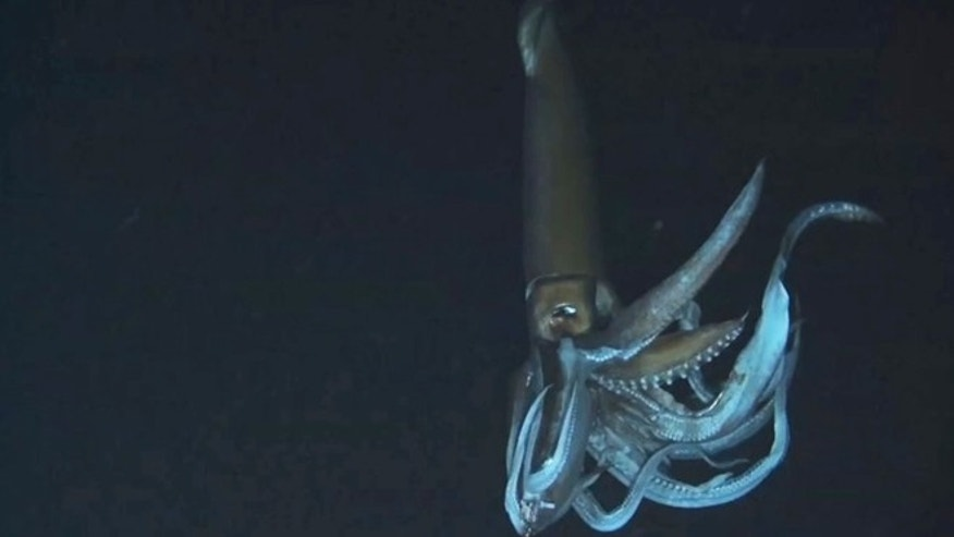 Footage captured by NHK and Discovery Channel in July 2012 shows a giant squid in the sea near Chichi island.
