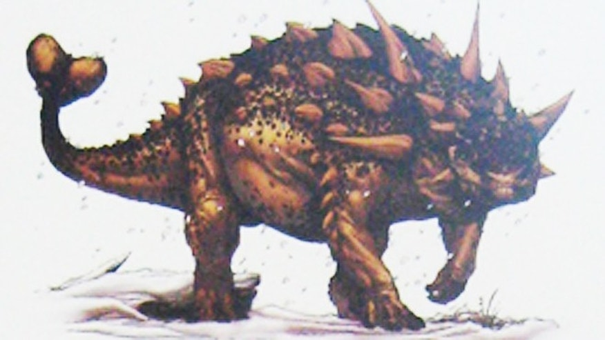 """Canadian Club,"" which could be one of the following clubbed ankylosaurs: Euoplocephalus (common), Scolosaurus and Dyoplosaurus (rare). The fossil is one of five featured in the Canadian Museum of Nature's ""Dino Idol"" contest."