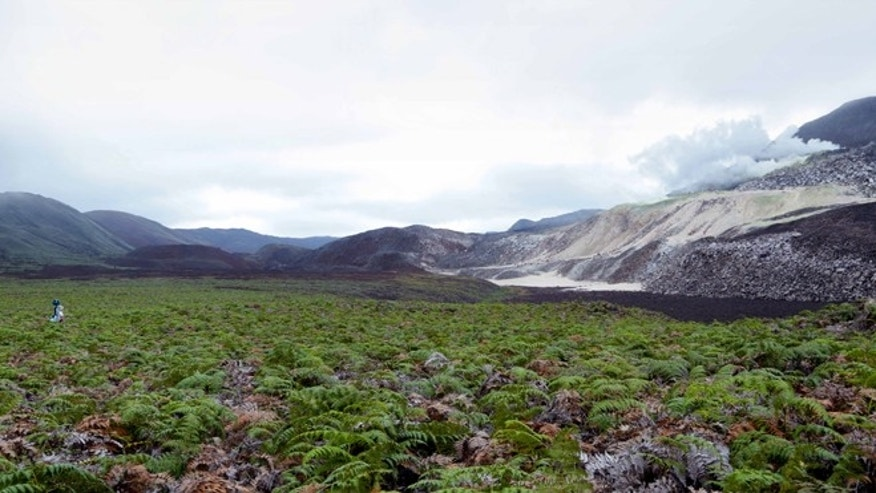 In this May 2013 photo provided by Google, Daniel Orellana of the Charles Darwin Foundation is shown crossing a field of ferns to reach some naturally­occurring sulfur mines on the top of Sierra Negra, an active volcano on Isabela Island in the Galapagos.