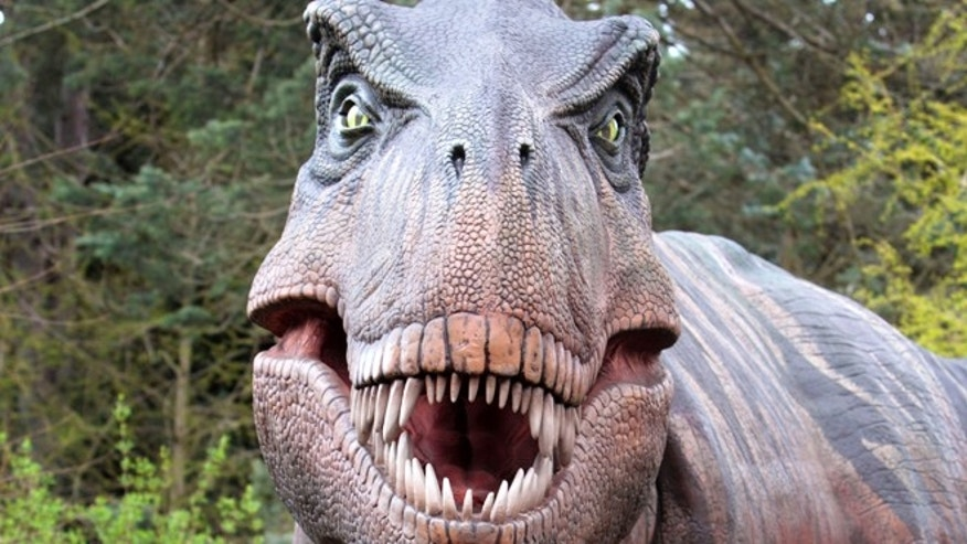 A Tyrannosaurus rex dinosaur replica at the Woodland Park Zoo in Seattle. Scientists have unearthed a dramatic remnant of an encounter between a Tyrannosaurus rex and a creature that got away, providing strong new evidence that the famous dinosaur hunted for food.
