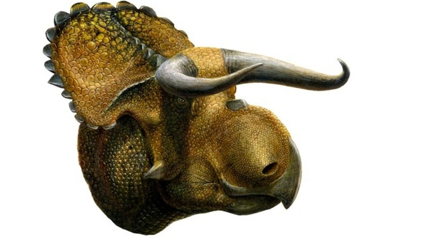 In 2013, Mark Loewen and his colleagues unearthed a new species of dinosaur, dubbed Nasutoceratops titusi.