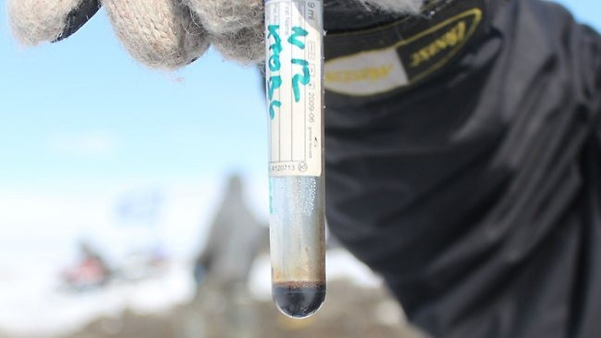 A researcher holding a test tube with what the scientists called a sample of well-preserved blood they found in a carcass of a female mammoth discovered on a remote island in the Arctic Ocean.
