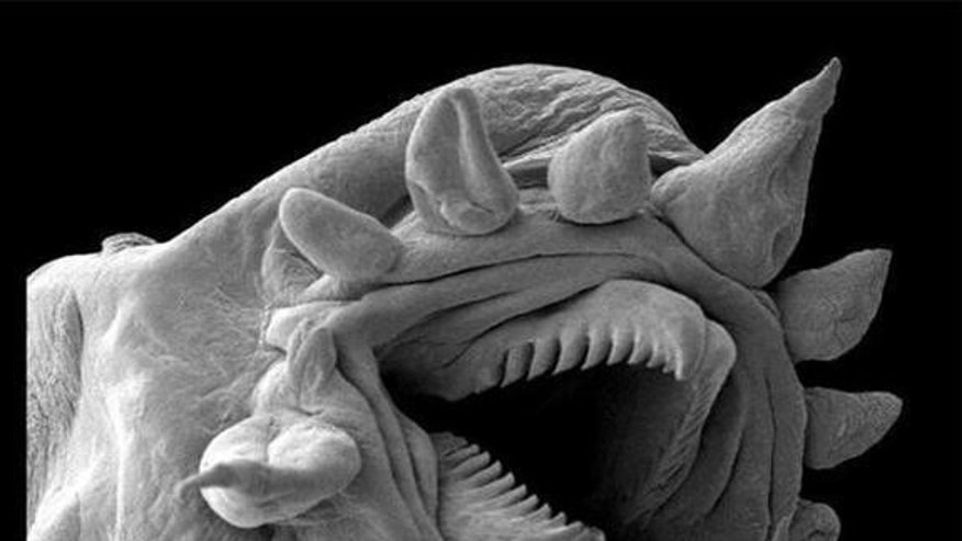 Today's microscopes provide a view of the unseen. Shown above: a hydrothermal worm, imaged with an electron microscope.