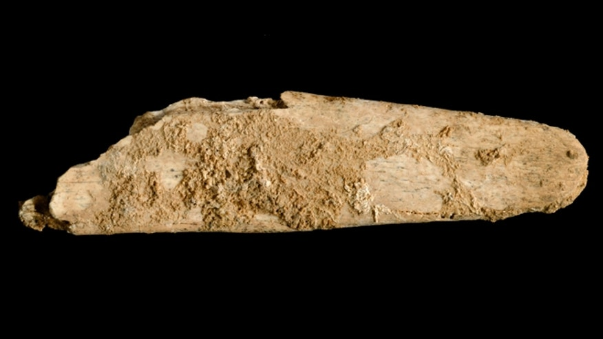 The most complete lissoir, or smoothing tool made of bone, smaller that a person&#39&#x3b;s hand at just a few centimeters long, found during excavations at the Neanderthal site of Abri Peyrony.