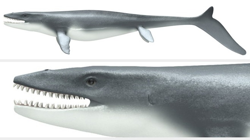 Mosasaurs, monstrous sea lizards that lived during the late Cretaceous Era, had the skeletons of lizards but swam like a shark.