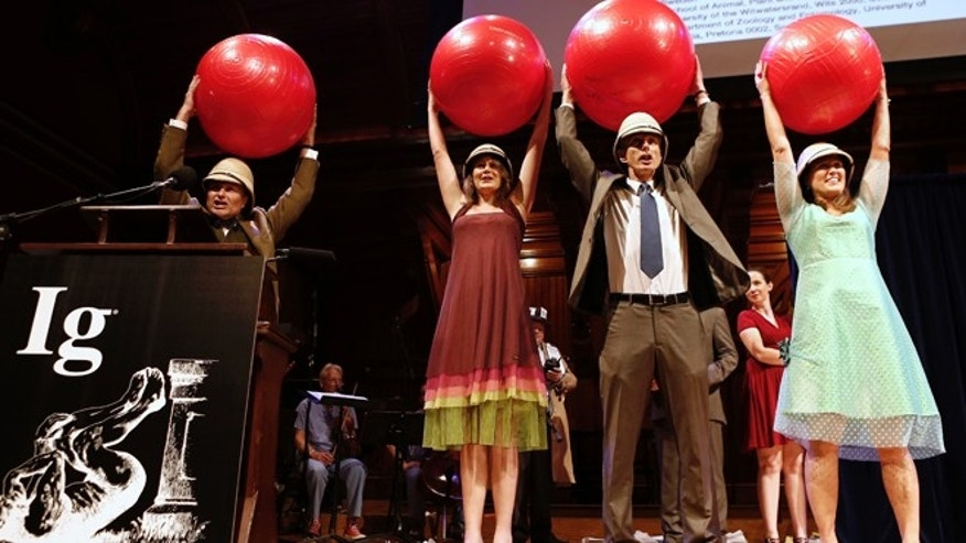 Sept. 12, 2013: Left to right, Eric Warrant, Emily Baird, Marcus Byrne, and Marie Dacke celebrate winning the Biology/Astronomy Prize during the annual Ig Nobel prize ceremony at Harvard University. They won for discovering that when dung beetles get lost they can navigate their way home by looking at the Milky Way.