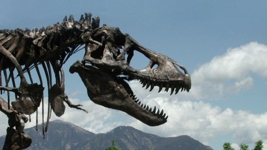 A cast of the Tyrannosaurus rex skeleton known as the Wankel T. rex was installed in front of the Museum of the Rockies at Montana State University in Bozeman, Montana in 2001. The actual fossil specimens are being loaned by the U.S. Army Corps
