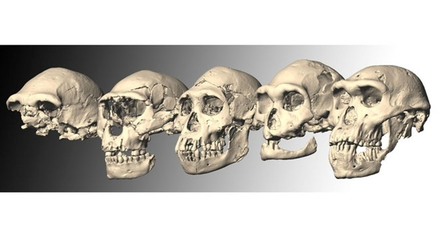 Dmanisi skulls 1-5 show remarkable differences -- and remarkable similarities.