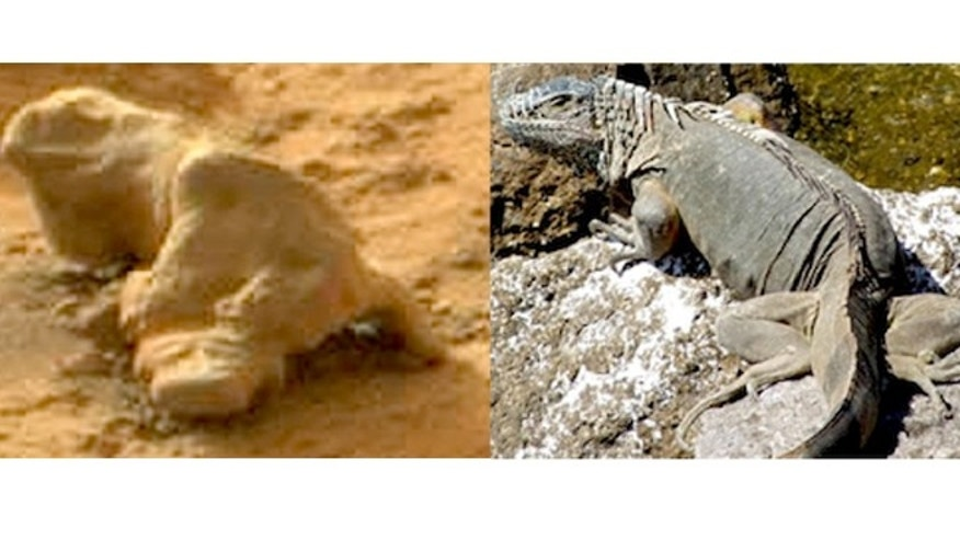 A rock found on Mars resembles an iguana.