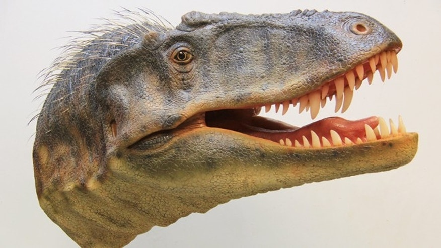 A fleshed out head recreates the appearance of Lythronax argestes, a great uncle to Tyrannosaurus rex.