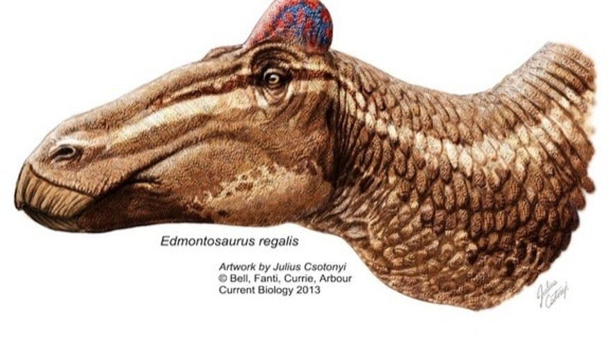 "A reconstruction of <i>Edmontosaurus</i> sporting a fleshy ""rooster"" comb."