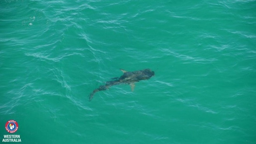 Dec. 23, 2013: A tagged shark tweets out its location thanks to a new program in Australia.