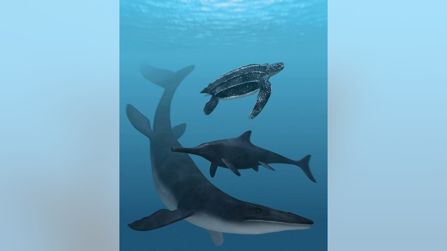 Fossil pigments reveal dark coloration of extinct marine reptiles. The leatherback turtle (top) and mosasaur (bottom) have a dark back and light belly, a camouflage pattern, and the ichthyosaur (center) is uniformly dark.