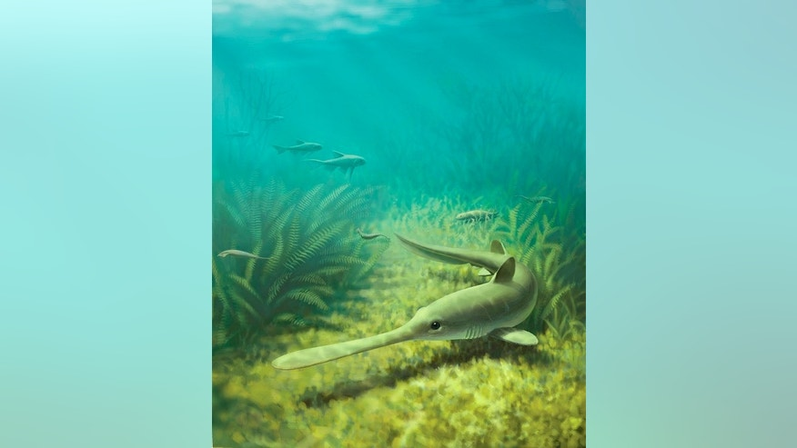 An artist's rendering of Bandringa, a 310 million-year-old shark originally found in fossil deposits from Mazon Creek, Illinois.
