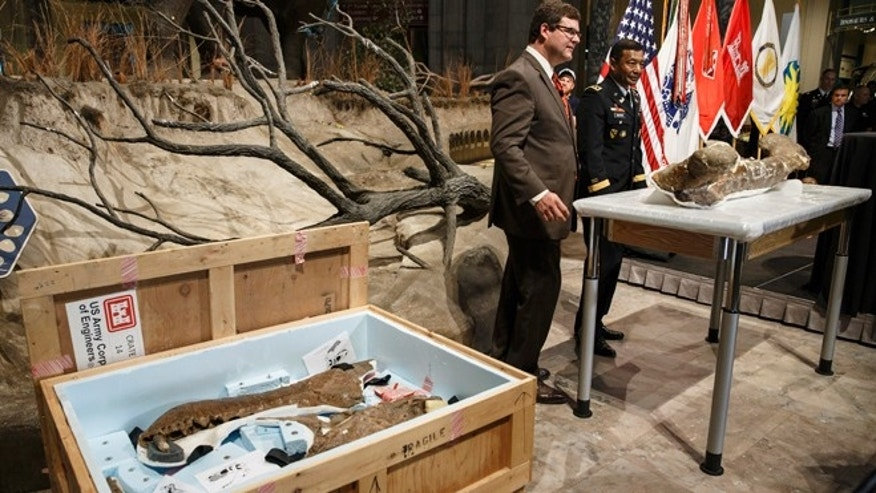 April 15, 2014: Smithsonian National Museum of Natural History Director Kirk Johnson, left, and Lt. Gen. Thomas Bostick, commanding general of the Army Corps of Engineers, unveil the fossilized bones of a Tyrannosaurus rex during a ceremony at the museum in Washington. The Tyrannosaurus rex is joining the dinosaur fossil collection on the National Mall on Tuesday after a more than 2,000-mile journey from Montana.